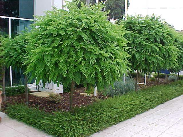 Mop Top Hello Hello Plants Amp Garden Supplies